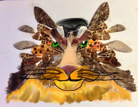 Butterfly Wolf or BUTTERWOLF!